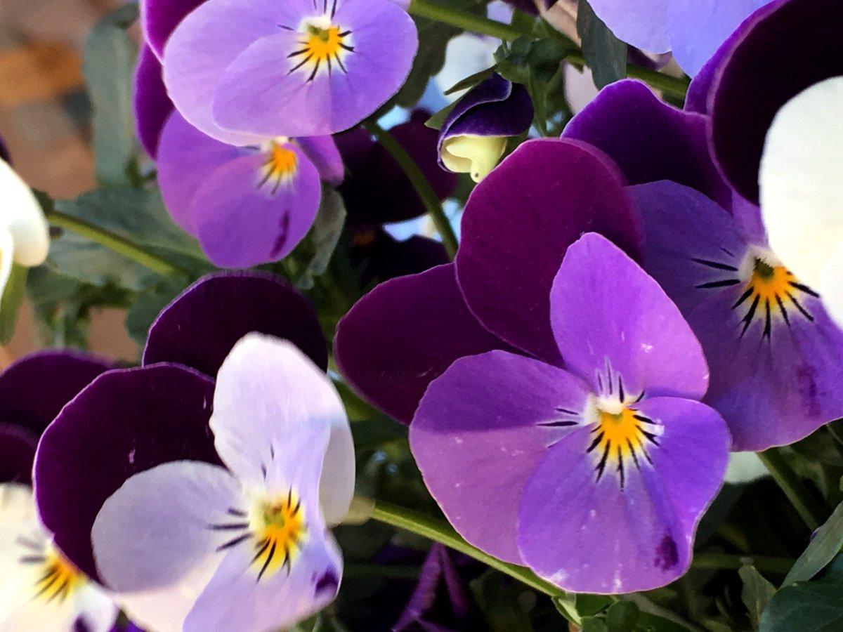 anna katerina desert flowers